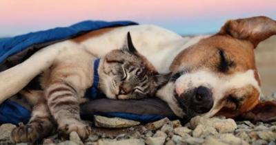 Pendaki Ini Bagikan Foto Anjing dan Kucingnya yang Saling Menyayangi