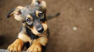 Gigiti Sandal Majikannya, 2 Anjing Ini Dihukum Layaknya Anak-Anak