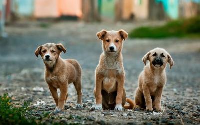 Heboh Lagu 'Makan Anjing Pakai Kol', Ini Hukumnya Makan Daging Anjing Menurut Islam