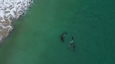 Viral Video Wanita Asik Berenang dengan Orca si Paus Pembunuh Liar