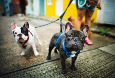 Nyanyian 'Makan Anjing Sayur Kol' Dikecam, Berikut 5 Manfaat Memelihara Anjing