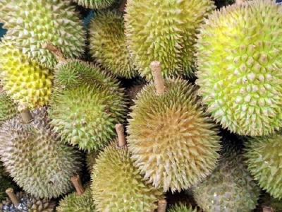 Durian Medan Dobrak Pasar Internasional dalam Bentuk Olahan Es Krim