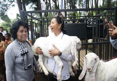 Aksi Menteri Rini Gendong Kambing