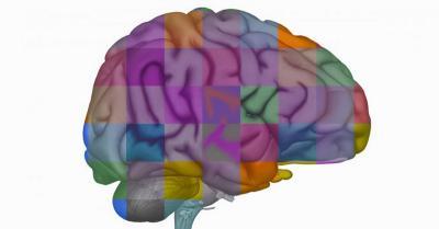 Ilmuwan Memasukkan Gen Otak Manusia ke Kera