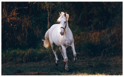 Orang-Orang Ini Pakai Sampo Kuda, Hasilnya Menakjubkan!