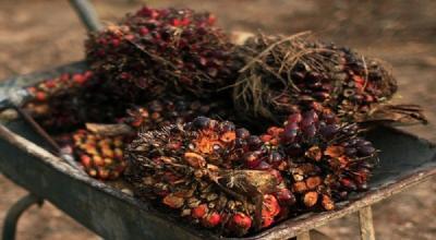 Ekspor Minyak Sawit Tahun Ini Diproyeksi Naik 3,4%