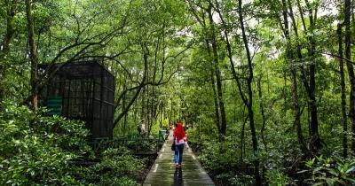 Pelestarian Hutan Mangrove untuk Lingkungan dan Tingkatkan Potensi Wisata Alam