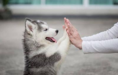 Wow! Peneliti Ungkap Anjing Bisa Deteksi Orang yang Depresi