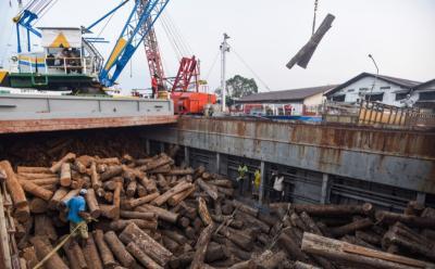 Pasok Kebutuhan Industri Kayu, 140 Kelompok Petani Hutan Difasilitasi
