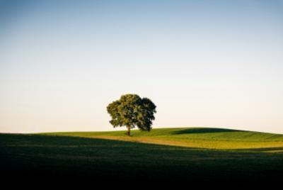 Bumi Miliki Ruang untuk 1 Triliun Pohon, Bisa Atasi Perubahan Iklim?