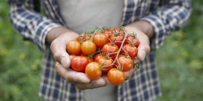 Berkaca dari Kasus Pneumonia Pelatih Juventus, Rutin Makan Tomat Bisa Bersihkan Paru-Paru