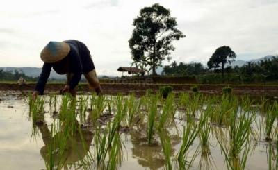 Ekspor Pertanian RI Meningkat, Ternyata China Masih Sering Impor