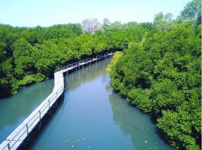 RI Suarakan Pentingnya Hutan Bakau sebagai Mitigasi Perubahan Iklim