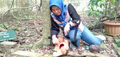Bunga Langka Rafflesia Patma Mekar di Kebun Raya Bogor