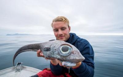 Muncul Ikan Aneh dengan Mata Raksasa, Ini Penampakannya