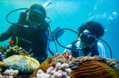 Memburu Keindahan Alam Bawah Laut di 5 Pulau Sulawesi