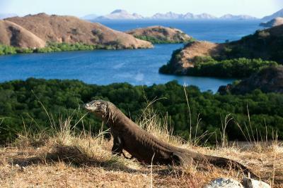Menpar Arief Yahya Pastikan Pulau Komodo Batal Ditutup