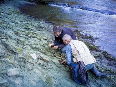 Ilmuwan Temukan Fosil Burung Tertua di Dunia