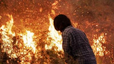 25.900 Hektar Hutan Terbakar di Kalbar, 133 Perusahaan Disanksi