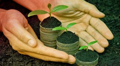 'Tanaman Uang' Mampu Tingkatkan Finansial? Jangan Harap, Berikut Fungsi Sebenarnya