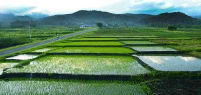 Indonesia Sudah Kehilangan Lahan Sawah 650.000 Ha
