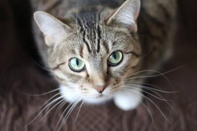 Kucing Ini Diinfus Usai Bercinta dengan 5 Ekor Betina