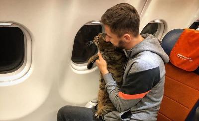 Tipu Petugas Bandara demi Terbang Bersama Kucing Kesayangan, Pria Ini Dapat Sanksi