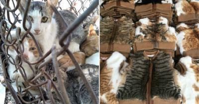 Produk Fashion dari Kulit Kucing Marak di China, Aktivis Hewan Angkat Bicara