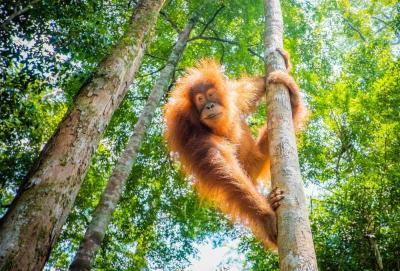 Berkunjung ke Sekolah Orangutan di Samboja Lestari Balikpapan, Seru dan Menantang!