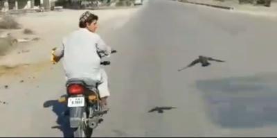 Bikers Ini Terima Tantangan Balapan dengan Burung Merpati