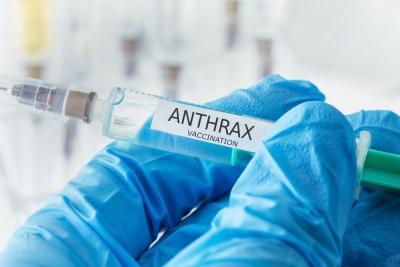 Waspadai Penyebaran Antraks, Klaten Tambah Stok Vaksin