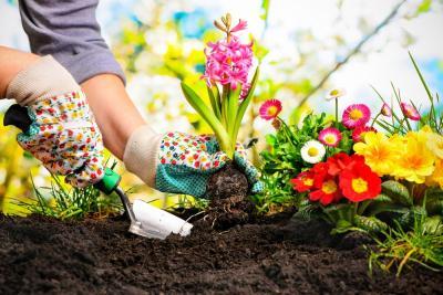 6 Cara Perindah Taman Anda, Cocouk untuk Rumah Minimalis