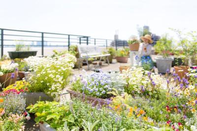 Yuk Bikin Taman Kecil di Rumah, Lebih Keren kalau di Rooftop