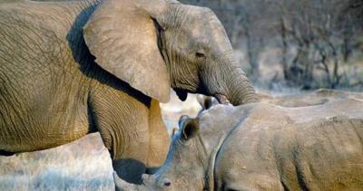 Terancam Punah, Gajah dan Badak Miliki Peran Penting untuk Ekosistem Bumi