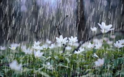 Musim Hujan, Usir Flu dengan Ramuan Alami Jahe Ini