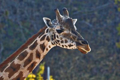 Kebun Binatang Ditutup karena Pandemi COVID-19, Anak-Anak Kirim Surat ke Hewan