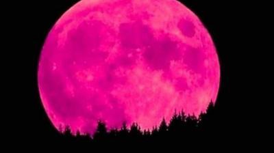 Bulan Purnama Supermoon Tandai Munculnya Lumut Merah Muda