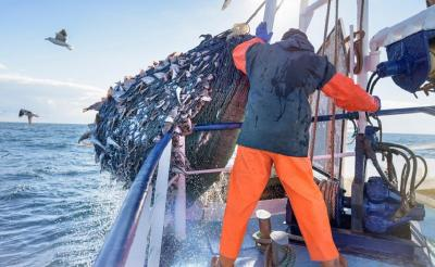 Ini Syarat Sektor Perikanan Jadi Core Ekonomi Menurut Ketua Dewan Pakar MPN