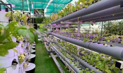 Ini Tips Membuat Kebun Vertikal di Rumah ala Kementan
